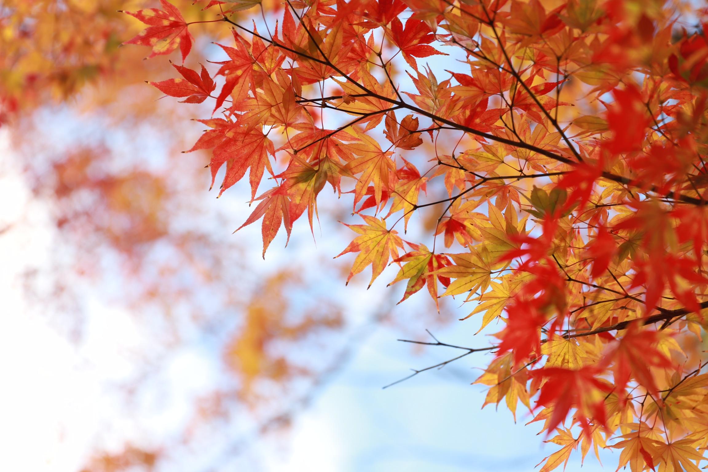 秋の風景🌼